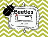 Beetles: Life Cycle, Habitats and Adaptations