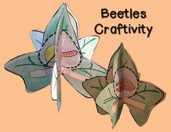 Beetles: Life Cycle, Habitats and Adaptations