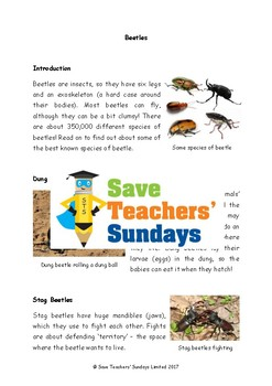 Beetles Non-fiction Text Comprehension / Guided reading (4 levels difficulty)