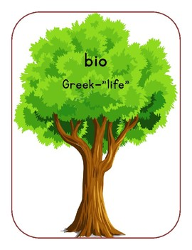 Beginning Greek and Latin Roots Anchor Charts
