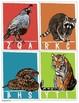 Beginning sound cards; Clip cards, Animal alphabet, Letter recognition