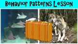 Behavior Patterns No Prep Lesson w/ Power Point, Worksheet, Circadian Activity