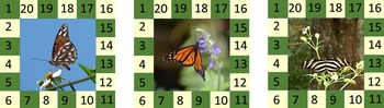 Behavior Punch Cards - Butterfly and Moth