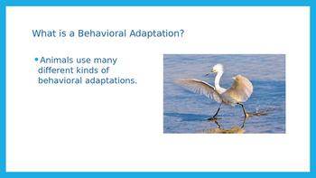 Behavioral Adaptations Powerpoint