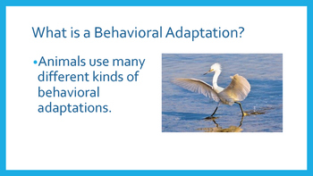 Behavioral Adaptations eBook pdf