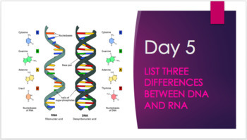 Bellringers: DNA and Protein Synthesis
