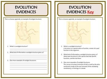 Bell Ringers - EVOLUTION EVIDENCES