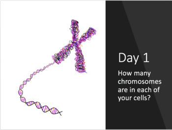 Bellringers: Meiosis and Genetics