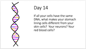 Bellringers: Mitosis and Cellular Differentiation