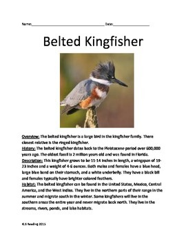 Belted Kingfisher - Bird - Review Info Article Questions Vocabulary Facts