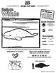 Beluga Whale -- 10 Resources -- Coloring Pages, Reading & Activities
