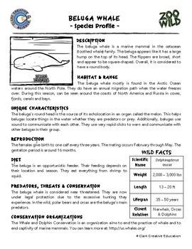 Beluga Whale - 15 Zoo Wild Resources - Leveled Reading, Slides & Activities