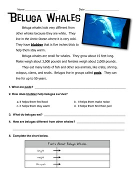 Beluga Whale Informational Text