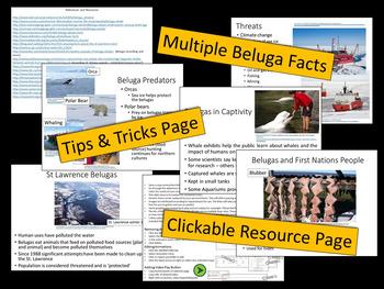 Beluga Whales - PowerPoint