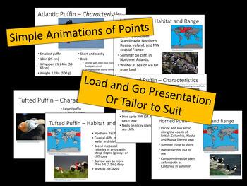 Puffins - PowerPoint Presentation