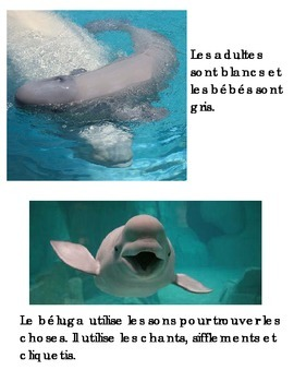 Animal Book -Beluga