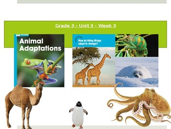 Benchmark Advance Supports - Third Grade - Unit 3 Week 3 - Everything You NEED!