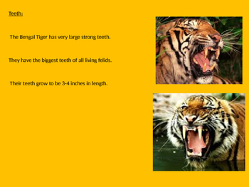 Bengal Tiger - Power Point information facts endangered