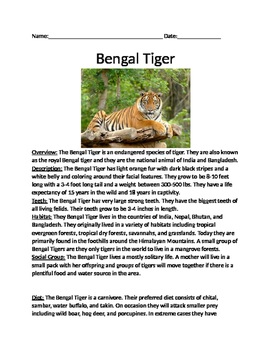 Bengal Tiger - informational article lesson facts questions vocab word search