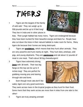 Bengal Tigers: Reading, Writing, and Arithmetic!