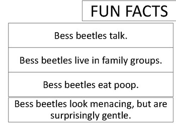 Bess Beetle Observation Journal