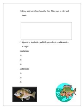 Beta Fish Lab