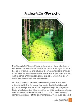 Forest Bialowieza Forests