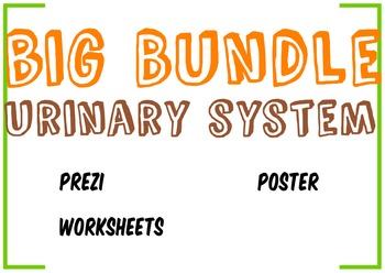 Big Bundle Urinary System