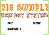 Big Bundle Urinary System