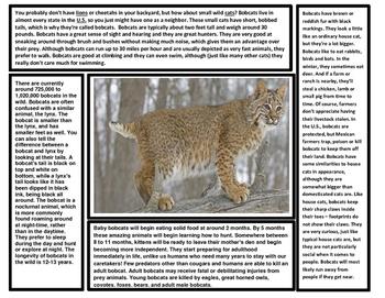 Big Cats Articles (Lion, Tiger, Cheetah, Jaguar, Leopard, Etc.) 8 Articles