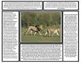 Big Cats Articles (Lion, Tiger, Cheetah, Jaguar, Leopard,