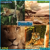 Big Cats - PowerPoint and Activities Bundle