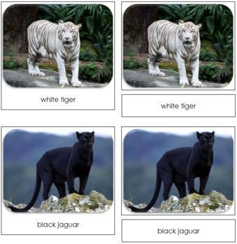 Big Cats Safari Toob Cards - Montessori