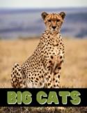 Big Cats Unit Study