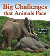 Big Challenges that Animals Face