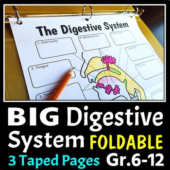 Digestive System Foldable Big Foldable For Interactive