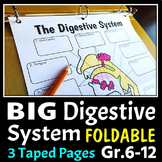 Digestive System Foldable - Big Foldable for Interactive Notebooks or Binders