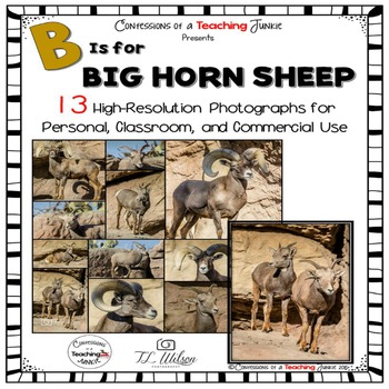 Big Horn Sheep Photographs for Classroom and Commercial Use