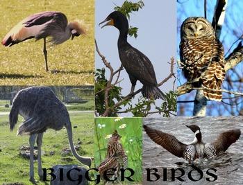 Bigger Birds.....(photos for commercial use)