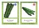 Bildkarten Gemüse