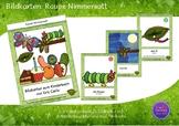 Bildkarten Tafelgröße - Raupe Nimmersatt