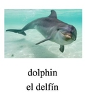Bilingual Animals (Aquatic Animals) English and Spanish PDF