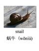 Bilingual Animals (Bugs) English and Simplified Chinese PDF