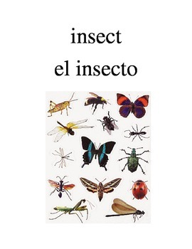 Bilingual Animals (Bugs) English and Spanish PDF