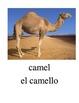 Bilingual Animals English and Spanish PDF