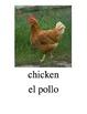 Bilingual Animals (Farm Animals) English and Spanish PDF