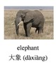 Bilingual Animals (Zoo Animals) English and Simplified Chinese PDF