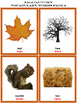 Bilingual Autumn/Fall Vocabulary Cards With Real Pictures