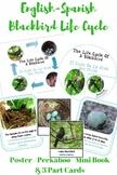 Bilingual Blackbird Life Cycle With Real Photos Preschool Science