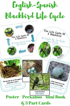 Bilingual Blackbird Life Cycle With Real Photos Preschool Science